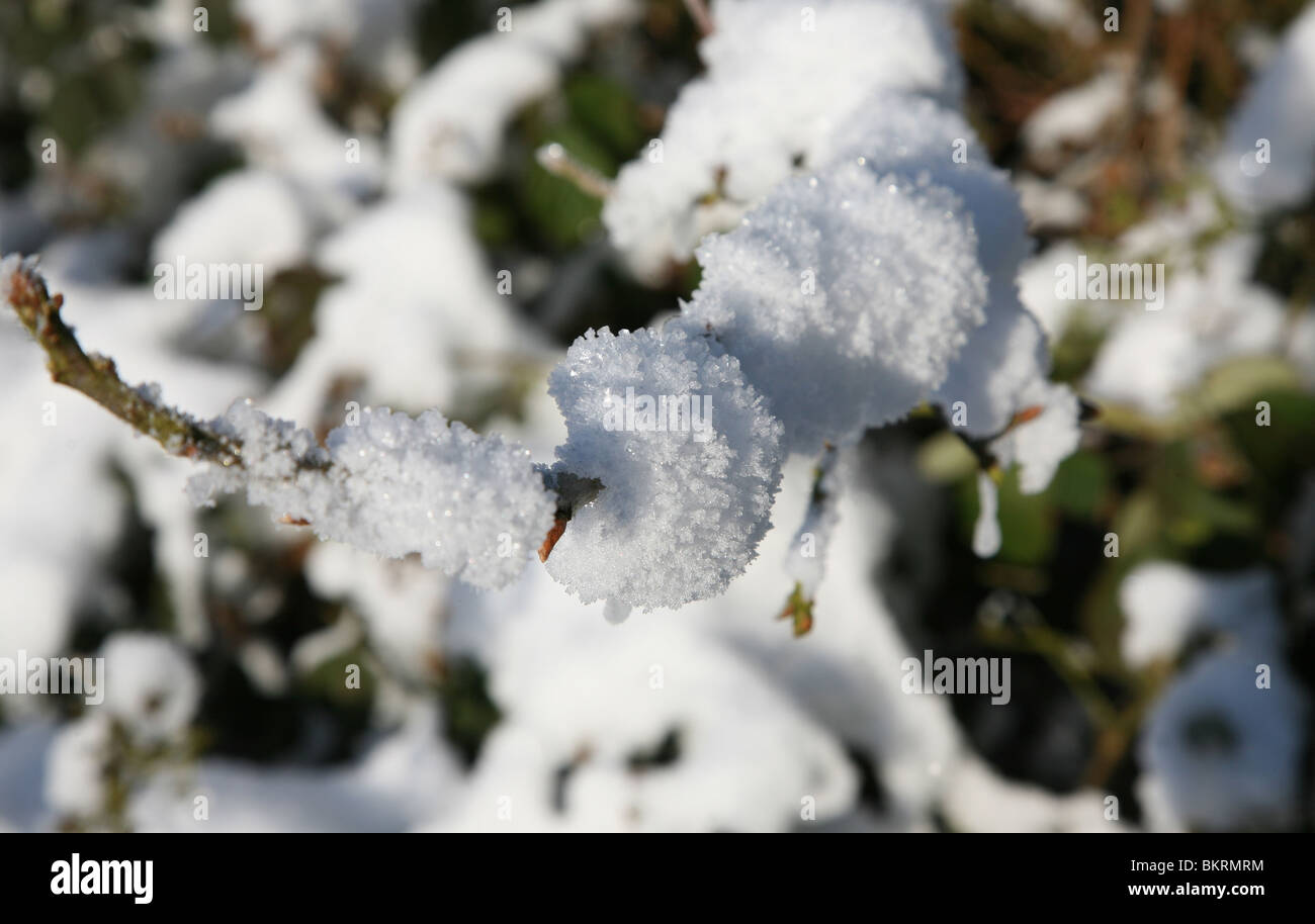 A twig or small branch covered in snow - Stock Image
