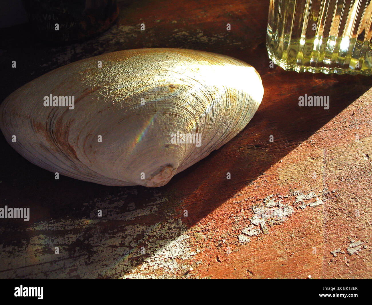 Clam shell on old painted surface. - Stock Image