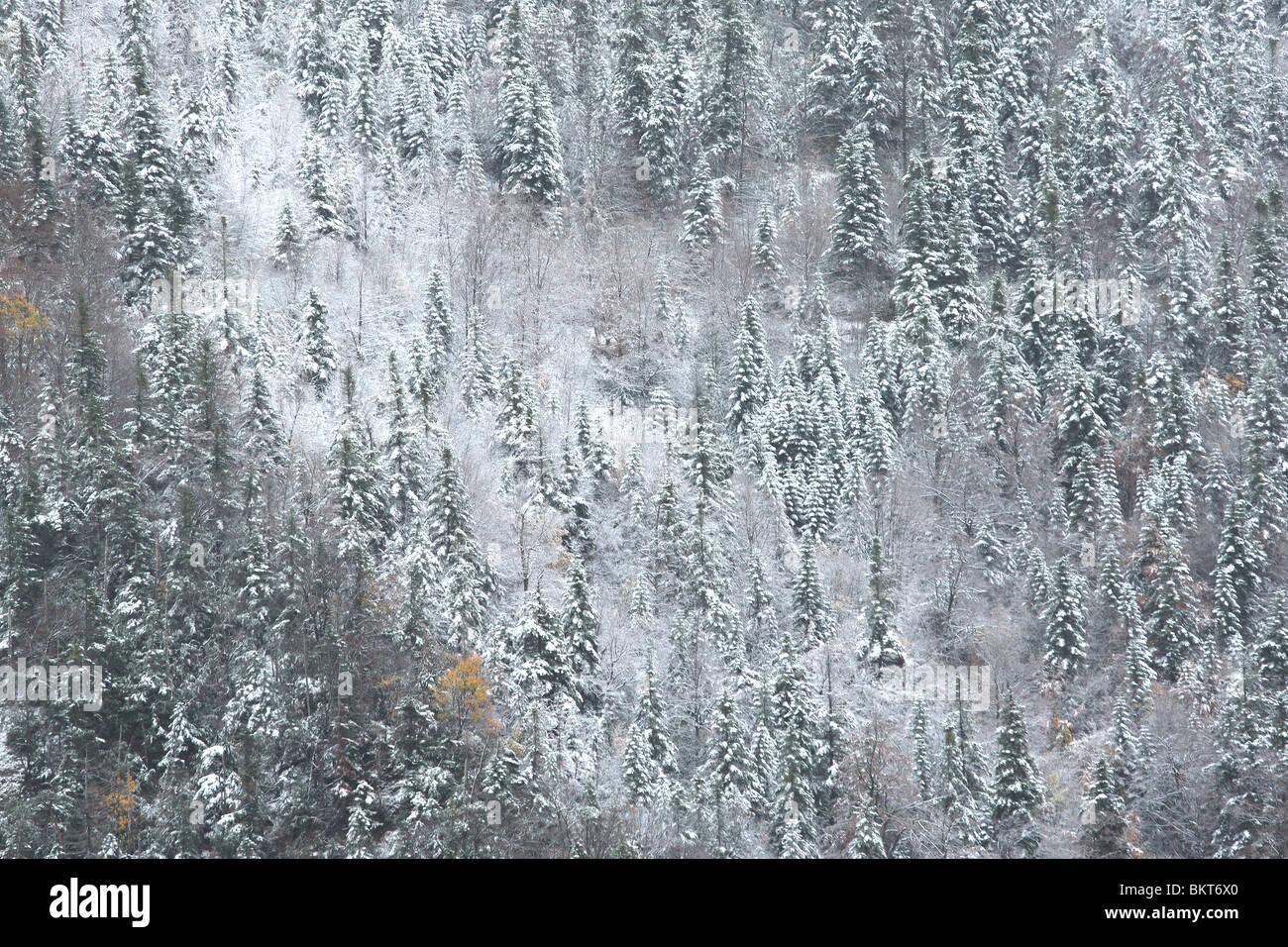 Besneeuwde bergtoppen en rotsen met naaldbos in mist, nationaal park Vercors, Frankrijk Snow covered mountain peaks - Stock Image