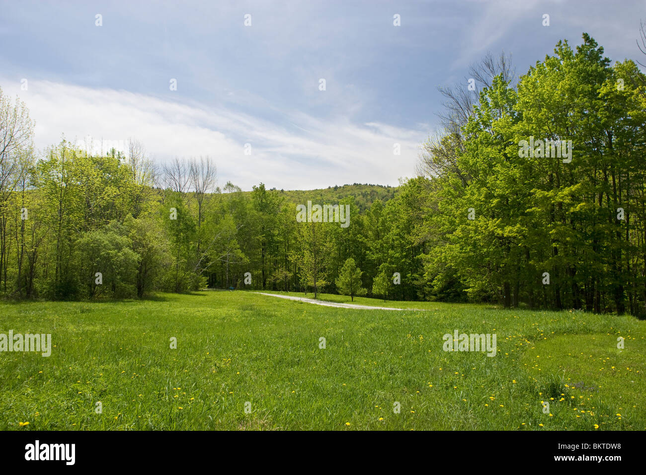 Summertime green meadow in rural Vermont - Stock Image