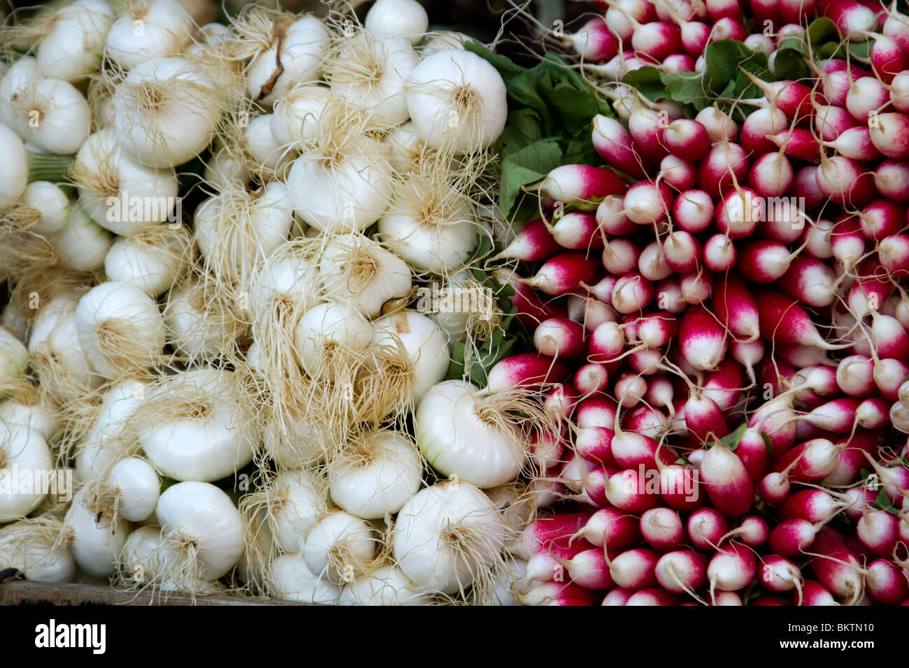 Spring onions and radishes for sale in Aligre Market, Paris - Stock Image