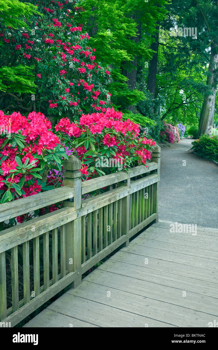 Portland's Crystal Springs Rhododendron Garden. - Stock Image