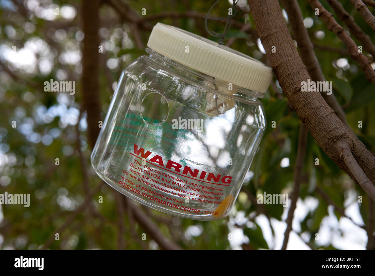 Insect trap containing Dichlorvos and Malathion insecticides hanging in a tree. - Stock Image