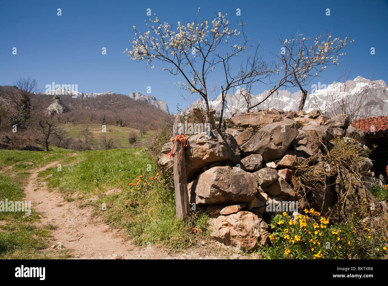 Spring flowers and blossom in the Picos Europa - Stock Image