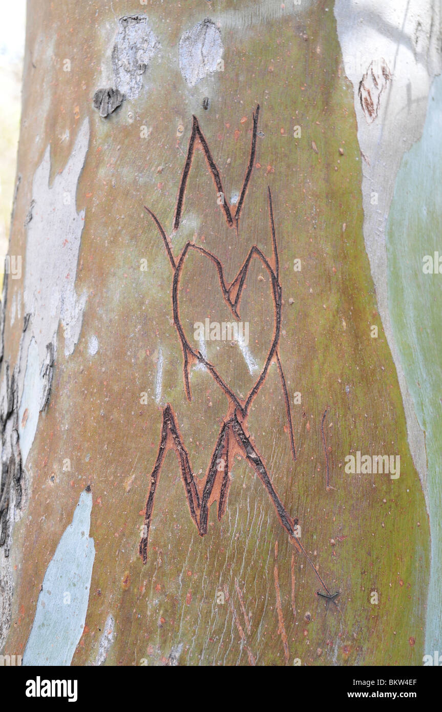 Graffiti carved in a tree trunk. N loves M - Stock Image