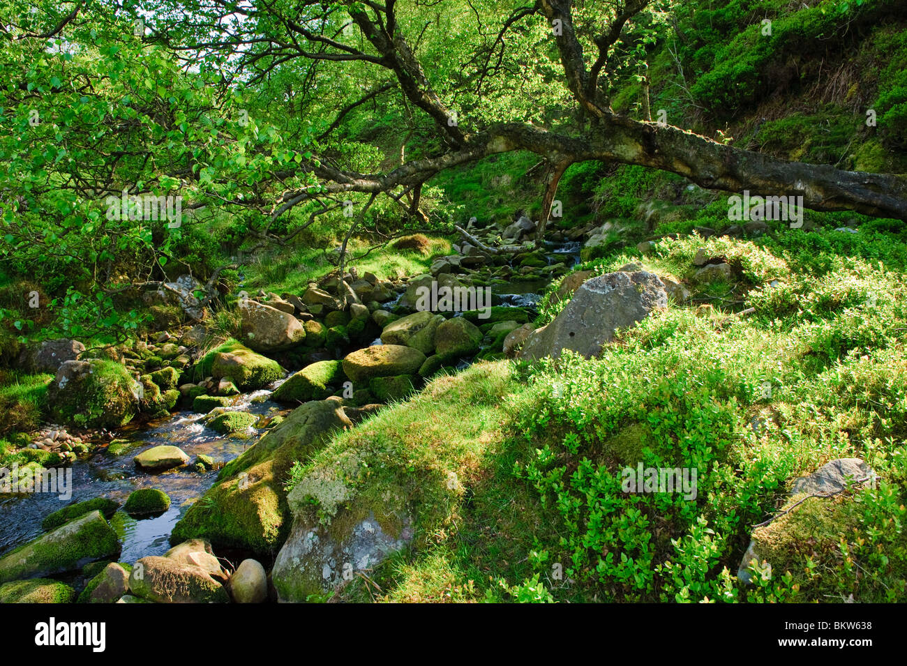 Black Clough on the slopes of Hawthornthwaite Fell in the Forest of Bowland, Lancashire, England - Stock Image