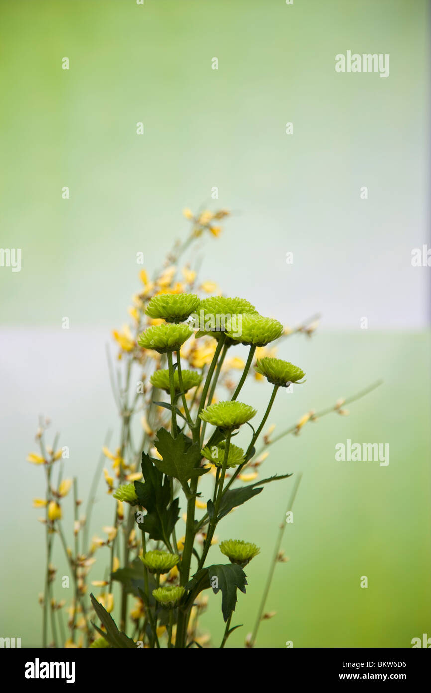 Flowers indoors - Stock Image