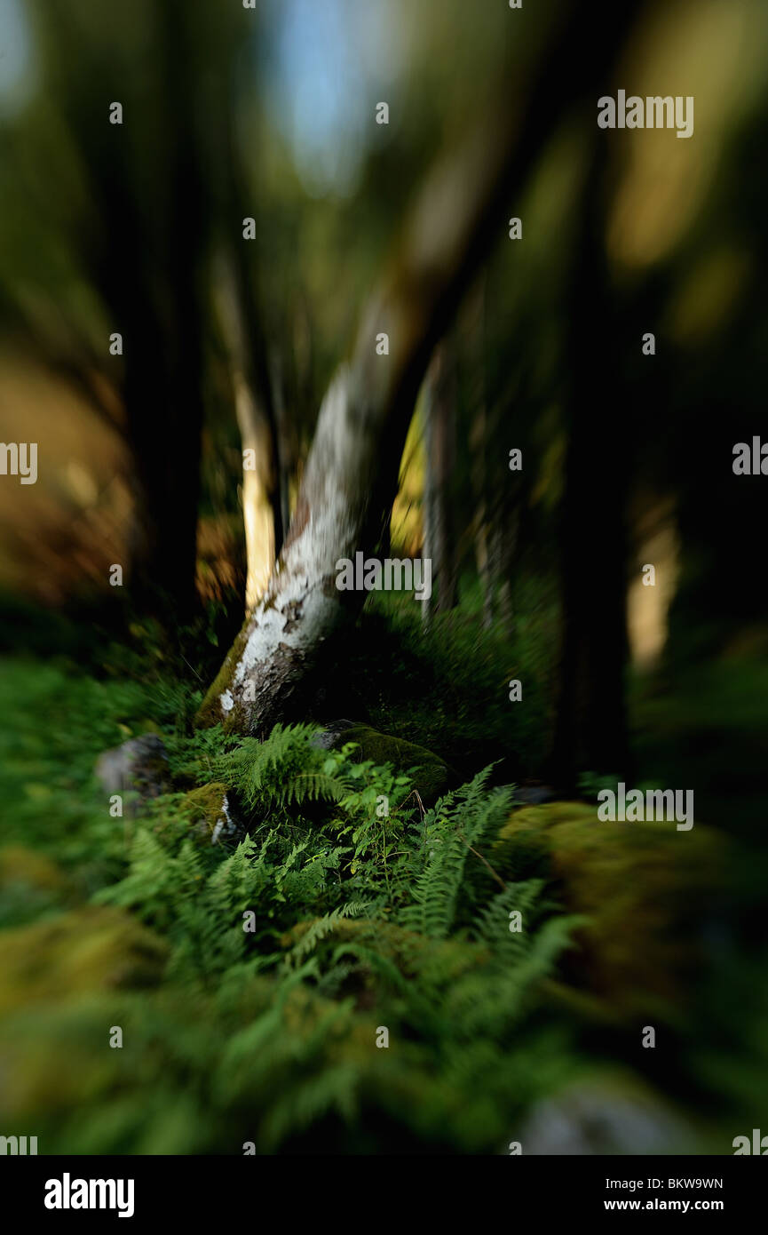 Vegetation in wood glide - Stock Image