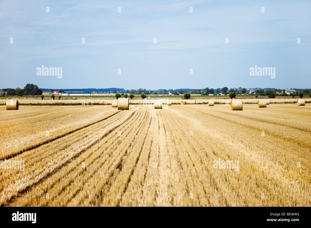 View over field - Stock Image