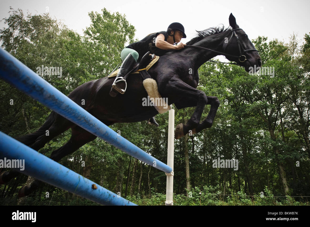Horse jumping over obstacle - Stock Image