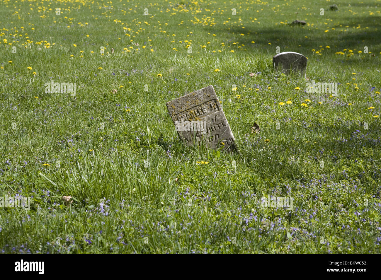 Old tombstone in a field - Stock Image