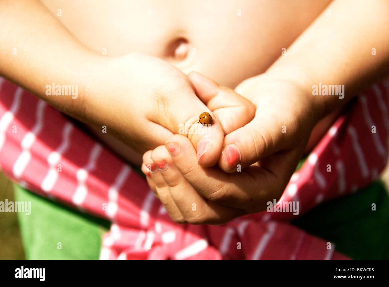 Ladybird on finger Stock Photo
