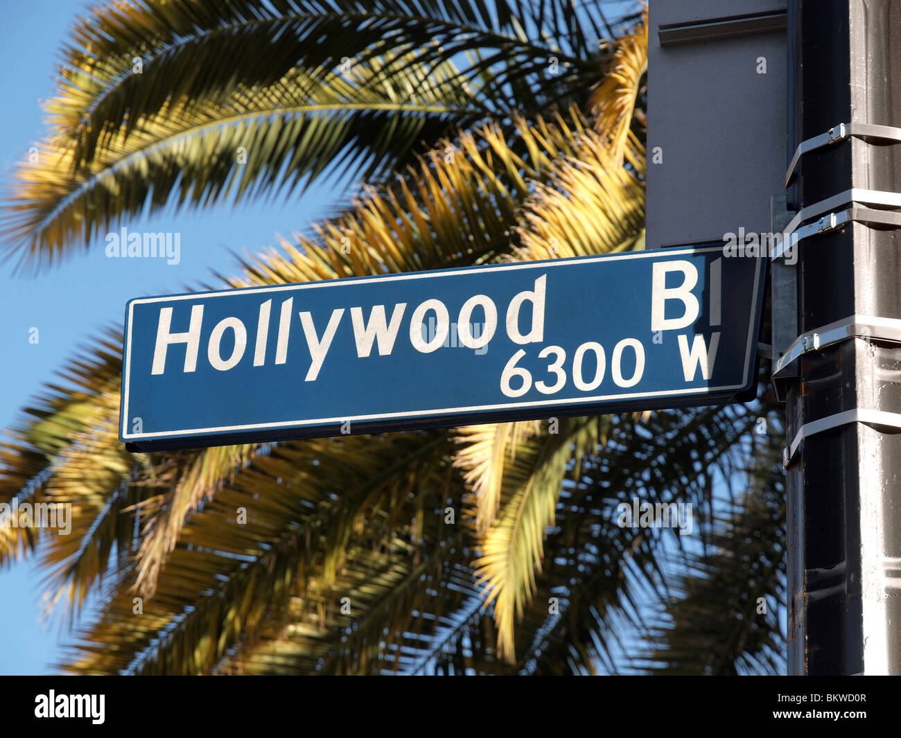 Hollywood Blvd street sign with tall palm trees. - Stock Image