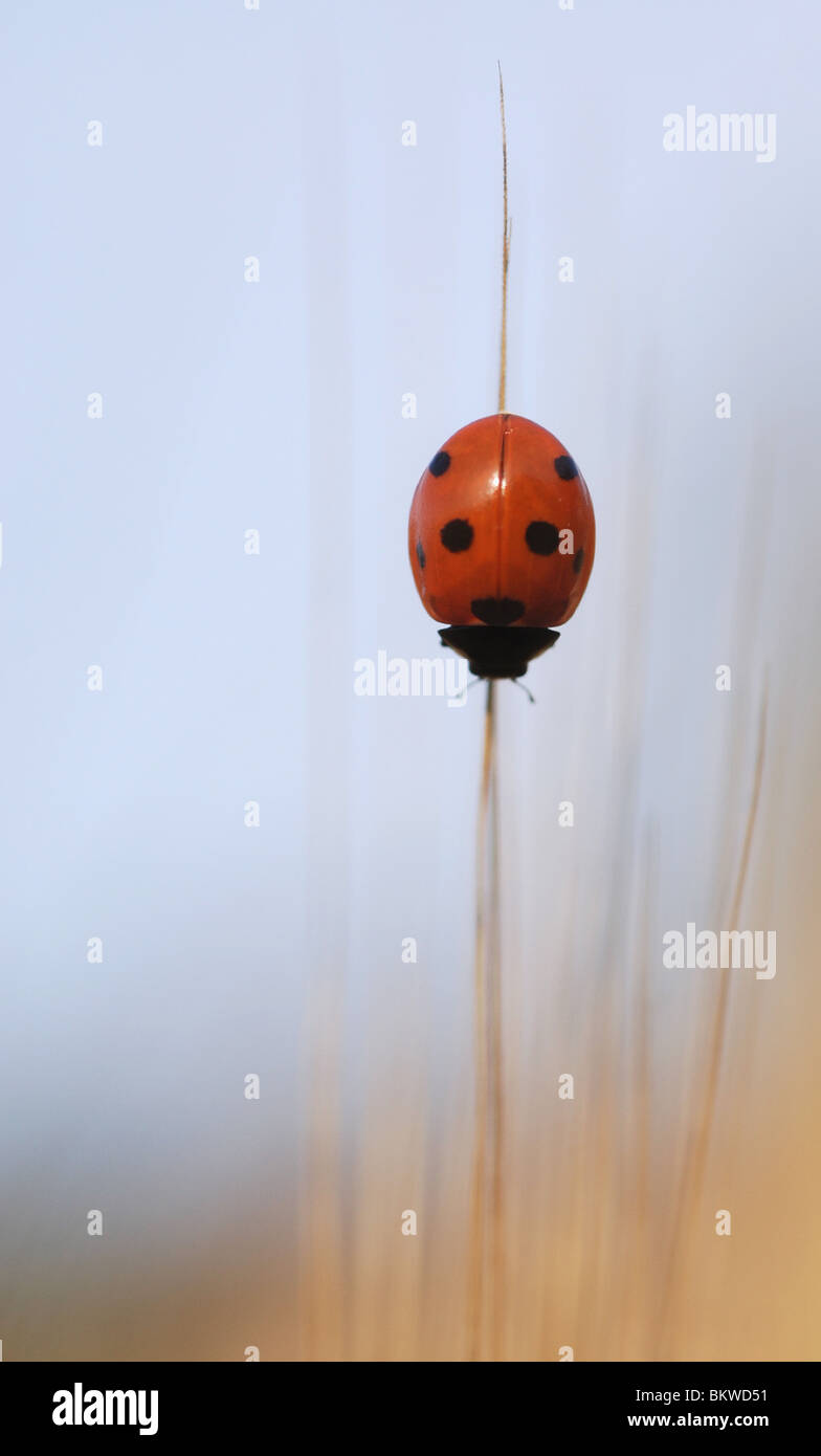 Red with dots - Stock Image
