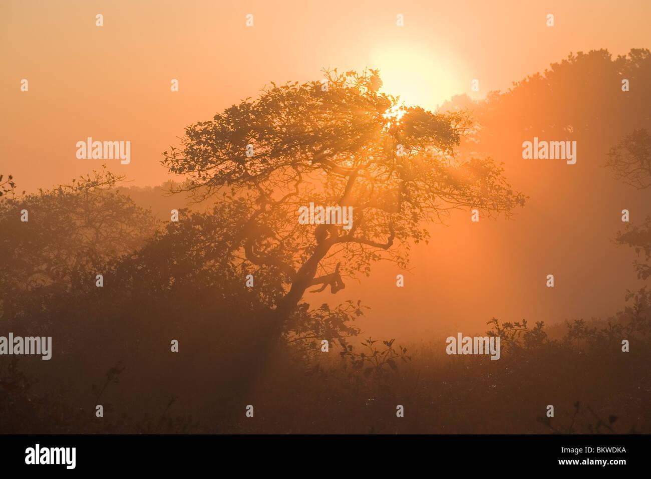 Sunrise over misty land. - Stock Image