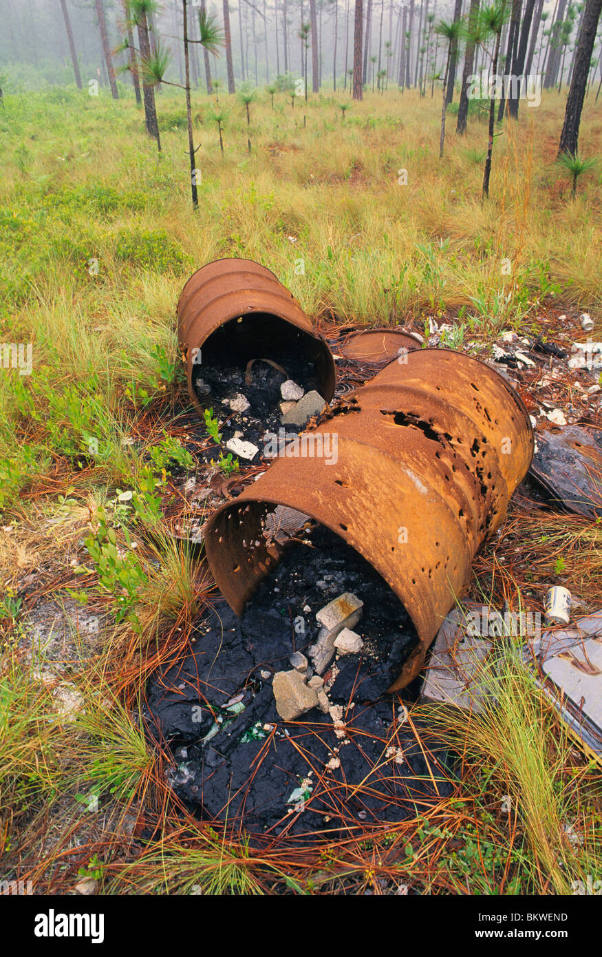 Illegal dumping of trash barrels in a Pine Forest Southeastern United States - Stock Image