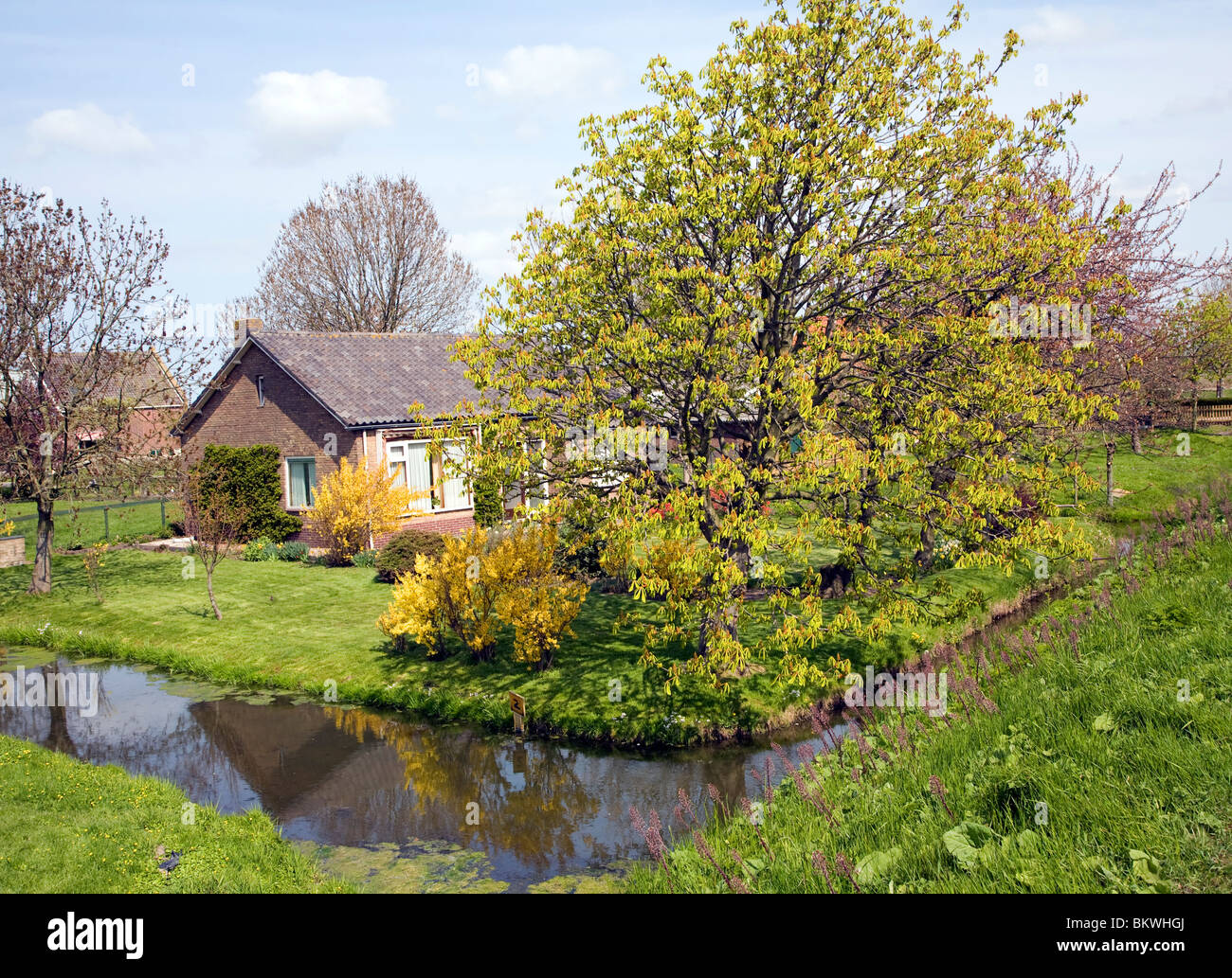 Farmhouse on small polder with canals, near Schipluiden, Netherlands - Stock Image