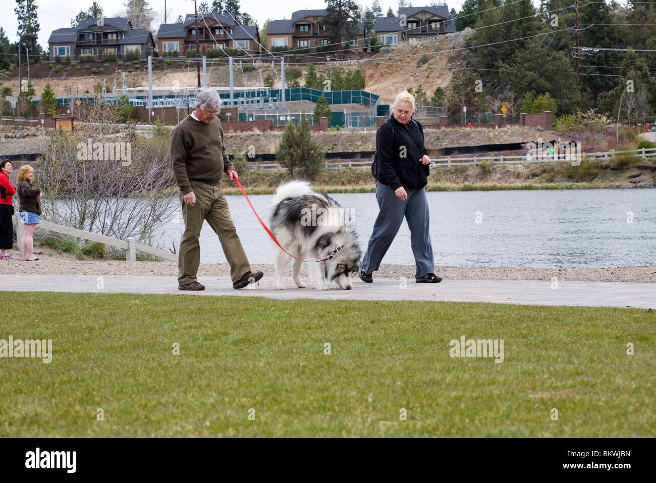 A senior citizen couple walk their large dog in a city park - Stock Image