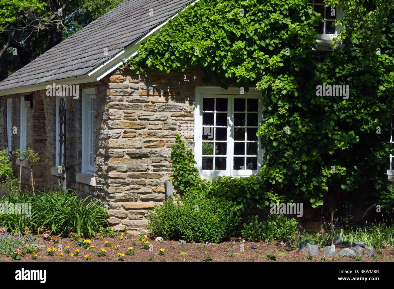 The gable end of a country cottage with ceder shakes stone chimney and ivy. Shot in early spring a green fir overhangs. - Stock Image