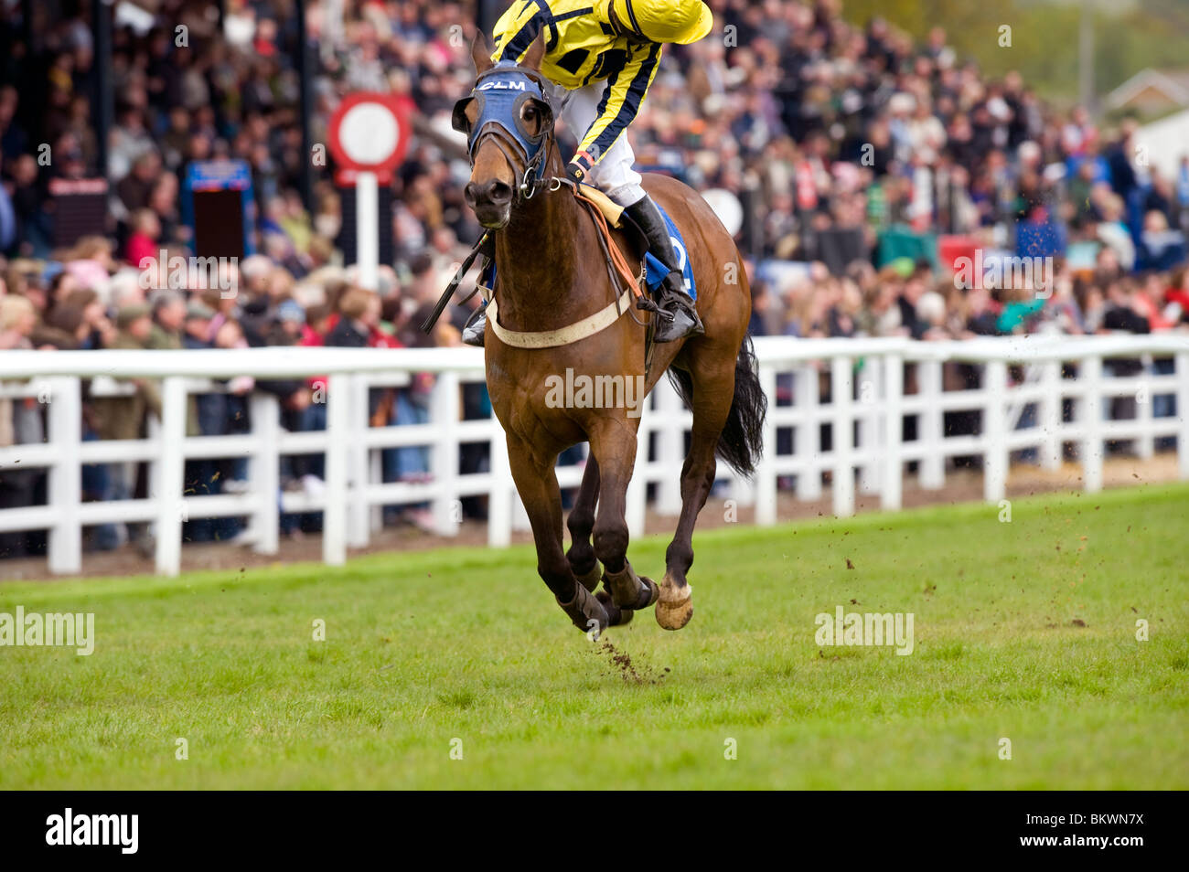 Plumpton Races in Sussex - mud flies high as the 2.20 first race of the afternoon passes the grandstand. - Stock Image