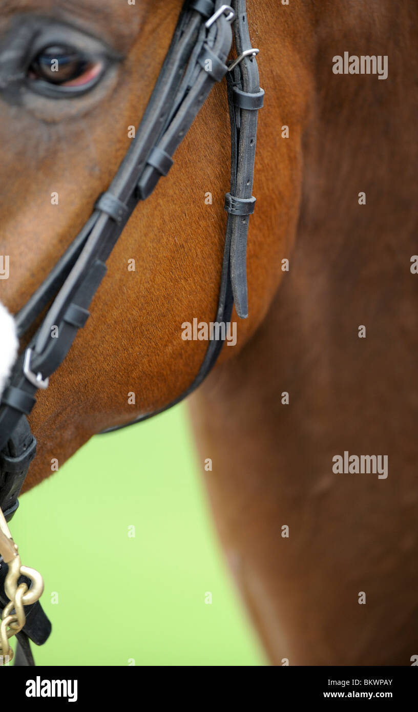 Plumpton Races in Sussex - close up of tack as a horse parades in the ring - Stock Image