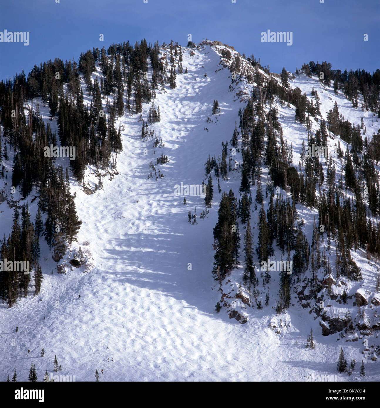 Moguls On Alf S High Rustler Trail At Alta Ski Mountain