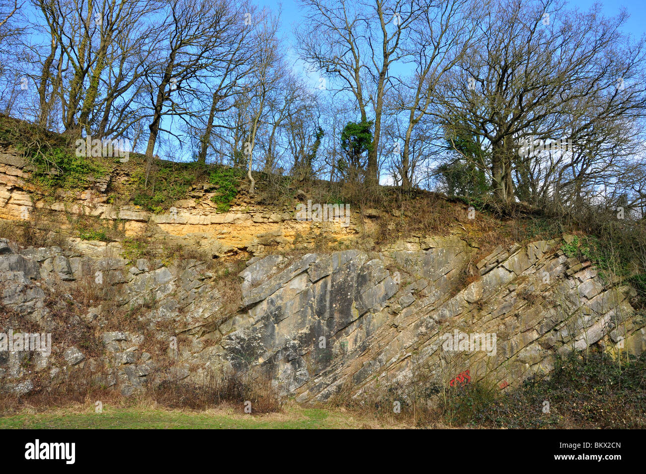 De la Beche Geological unconformity Yellow inferior Oolite over steeply dipping grey Carboniferous Limestone. - Stock Image