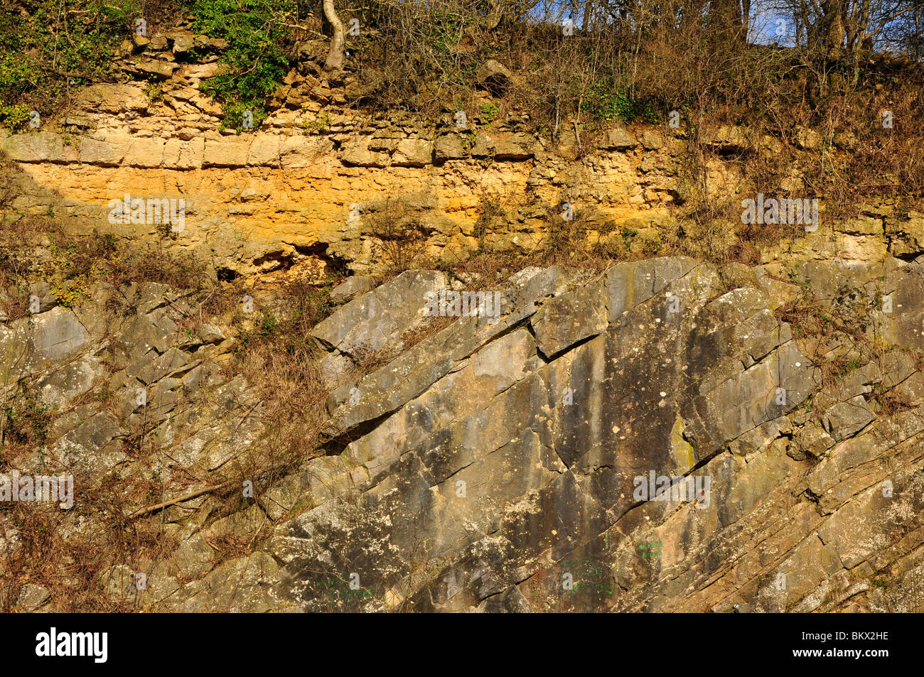 De la Beche geological unconformity Yellow inferior Oolite Limestone rests on a steeply dipping grey Carboniferous - Stock Image