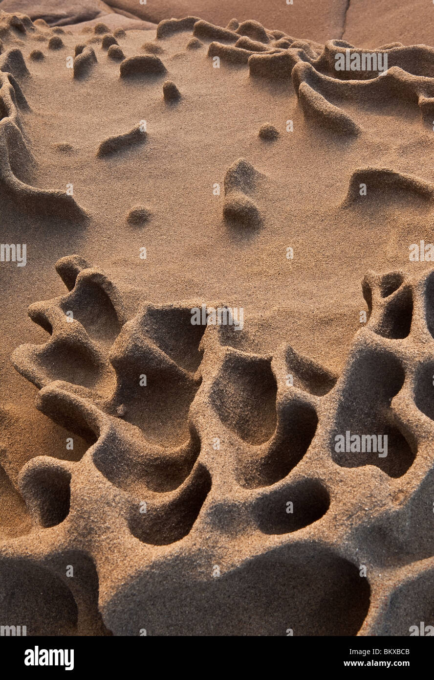 The shapes and structures of Sandstone cliffs on the Californian coast 30 miles north of Santa Cruz USA - Stock Image