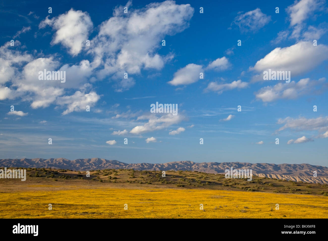 Carrizo Plain National Monument, CA: Evening clouds over the distant hills of the Temblor range with goldfields - Stock Image