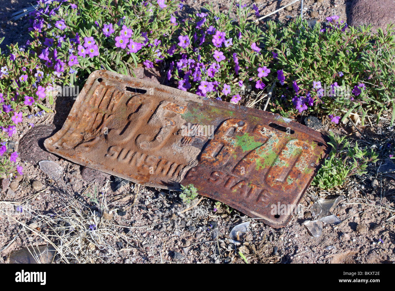Old New Mexico, United States automobile license plate with Bristly Nama wildflower. - Stock Image
