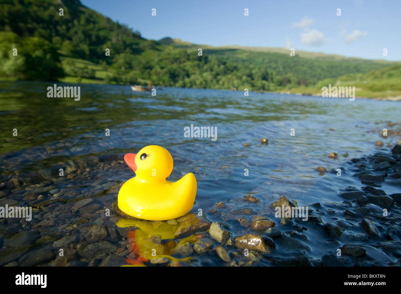 Lonely Rubber Duck Stock Photos Images Natural A On Rydal Water Lake District Uk Image