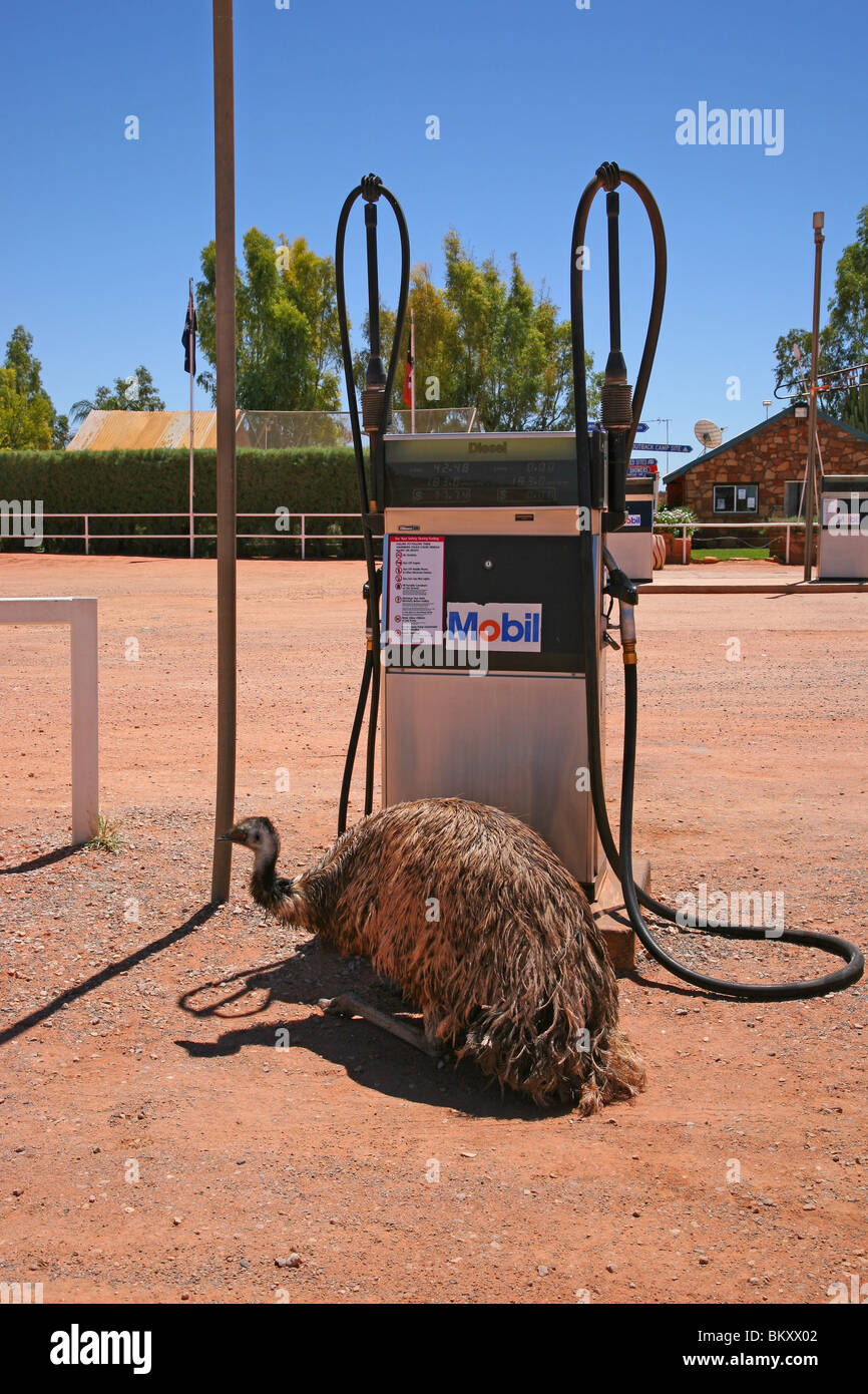 Ostrich at Mobil petrol station on route to Ayers Rock - Stock Image
