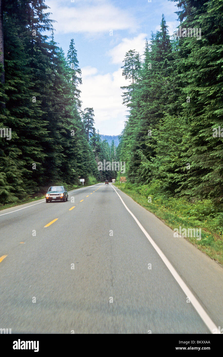Forest Tree Farm Oregon Road Highway Car Clean Air Blue Sky Pretty