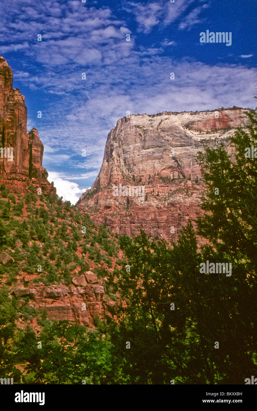 red sandstone cliffs rise against clear blue sky Zion National Park, Utah, USA - Stock Image
