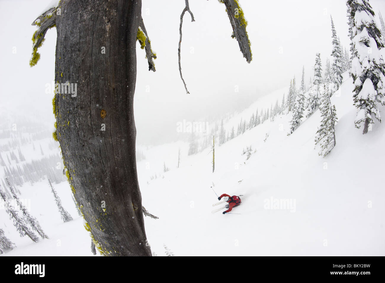 A backcountry skier skis down a steep gully into the fog. - Stock Image