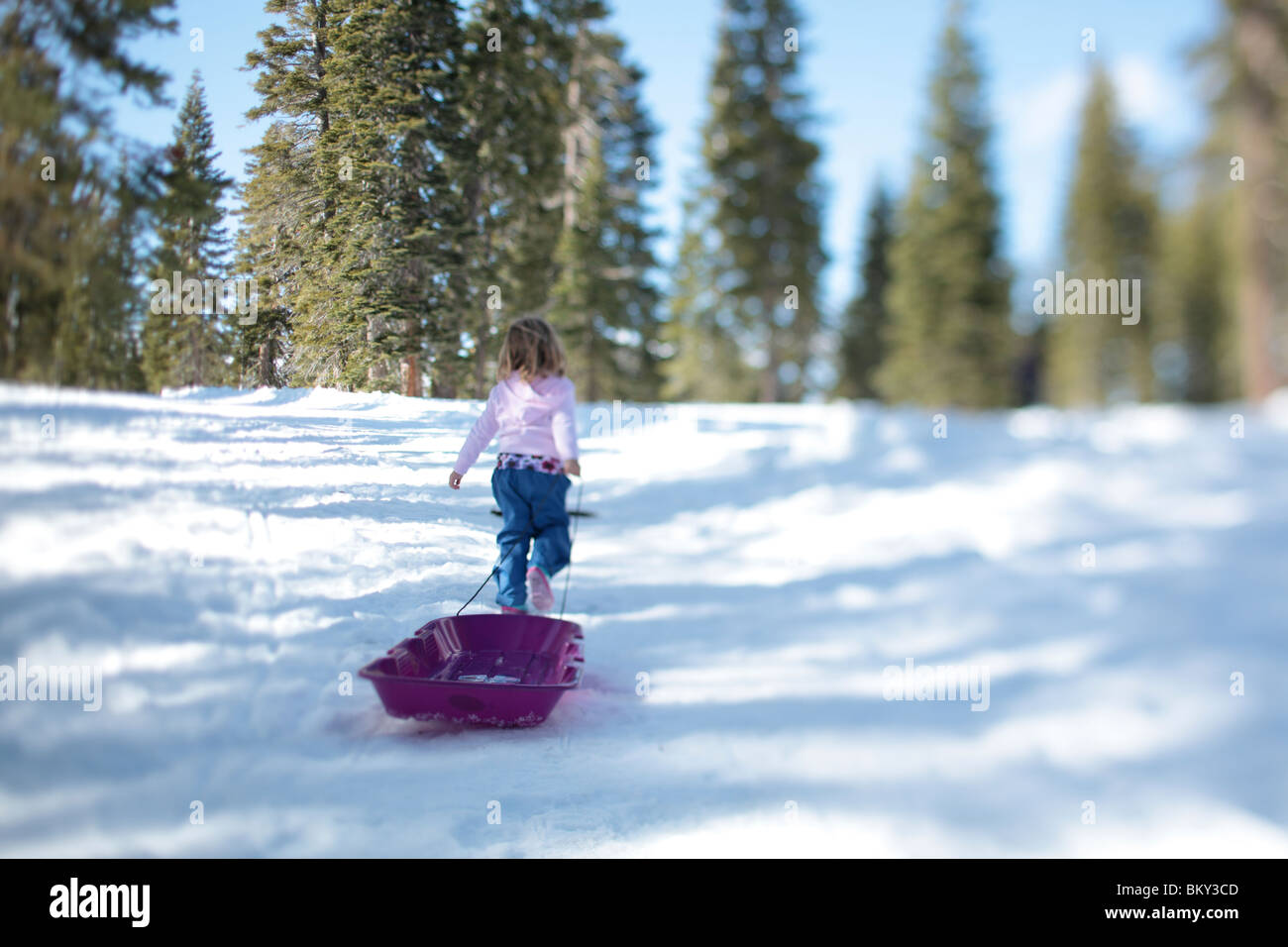 A three year-old girl with a purple sled in the snowy wilderness of Lake Tahoe, Calfornia. - Stock Image