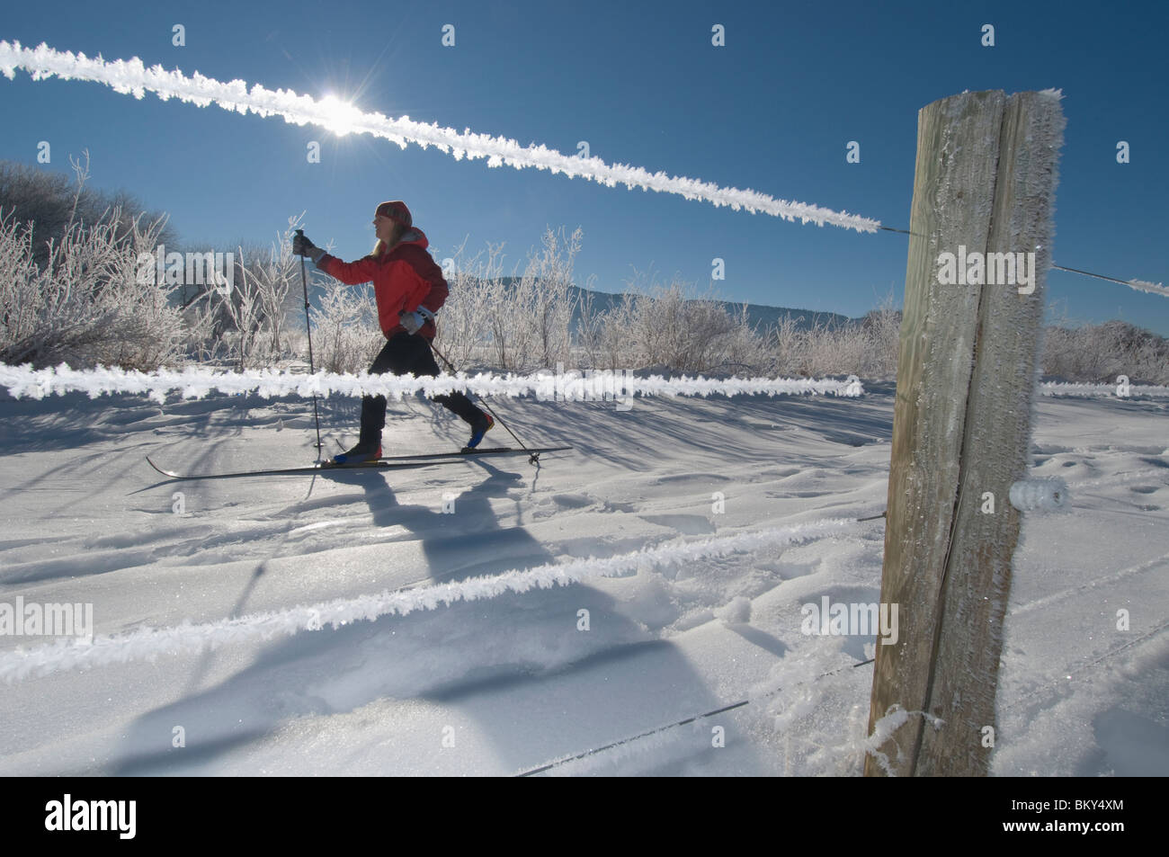 A woman cross country skiing next to frost covered fence in the Animas River Valley, Durango, Colorado. Stock Photo