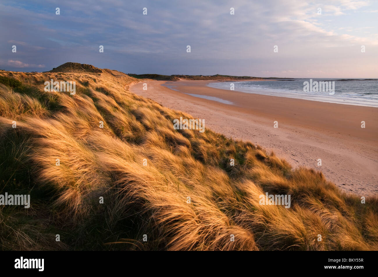 Golden sand dunes of Embleton Bay Northumberland - Stock Image