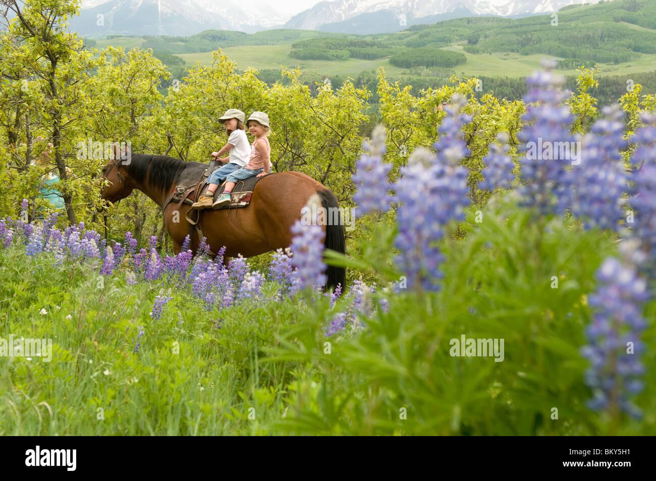 Two young girls horseback riding along trail past lupine flowers near, Telluride, Colorado. - Stock Image