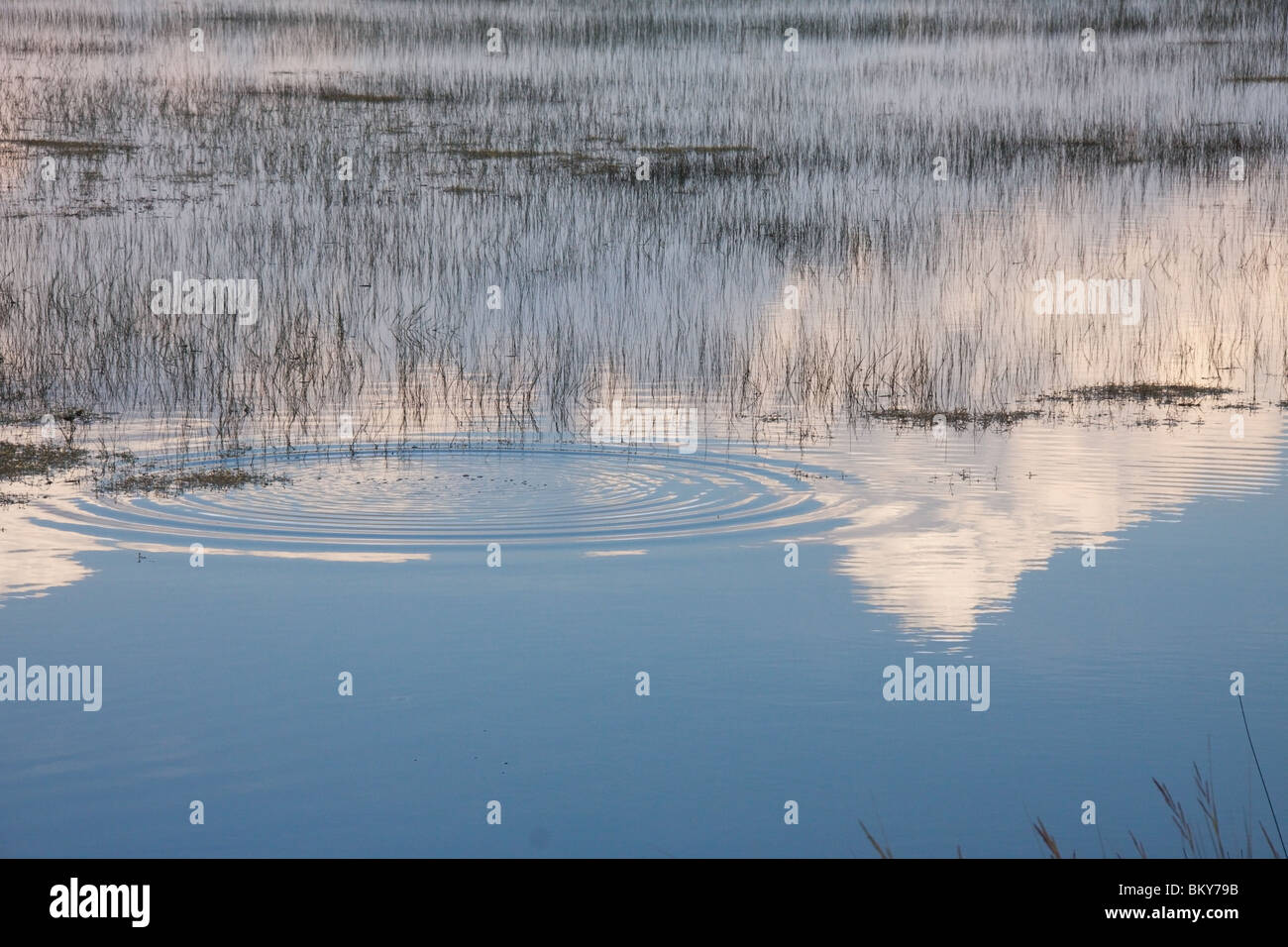 Early evening in the marsh at St Marks Florida USA - Stock Image