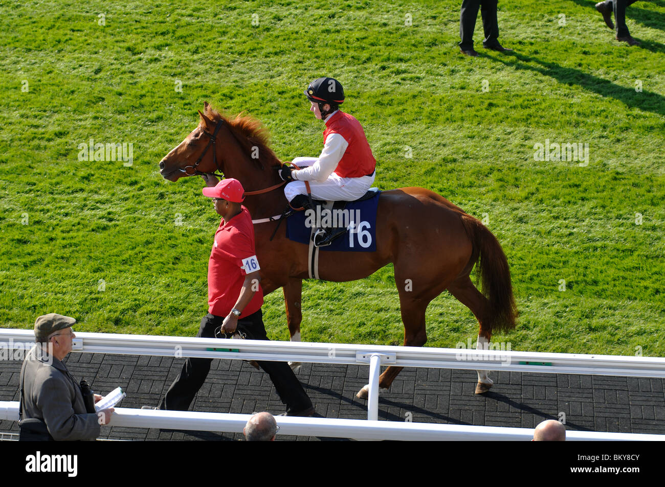 Horse led in the Parade Ring at Warwick Races, UK - Stock Image