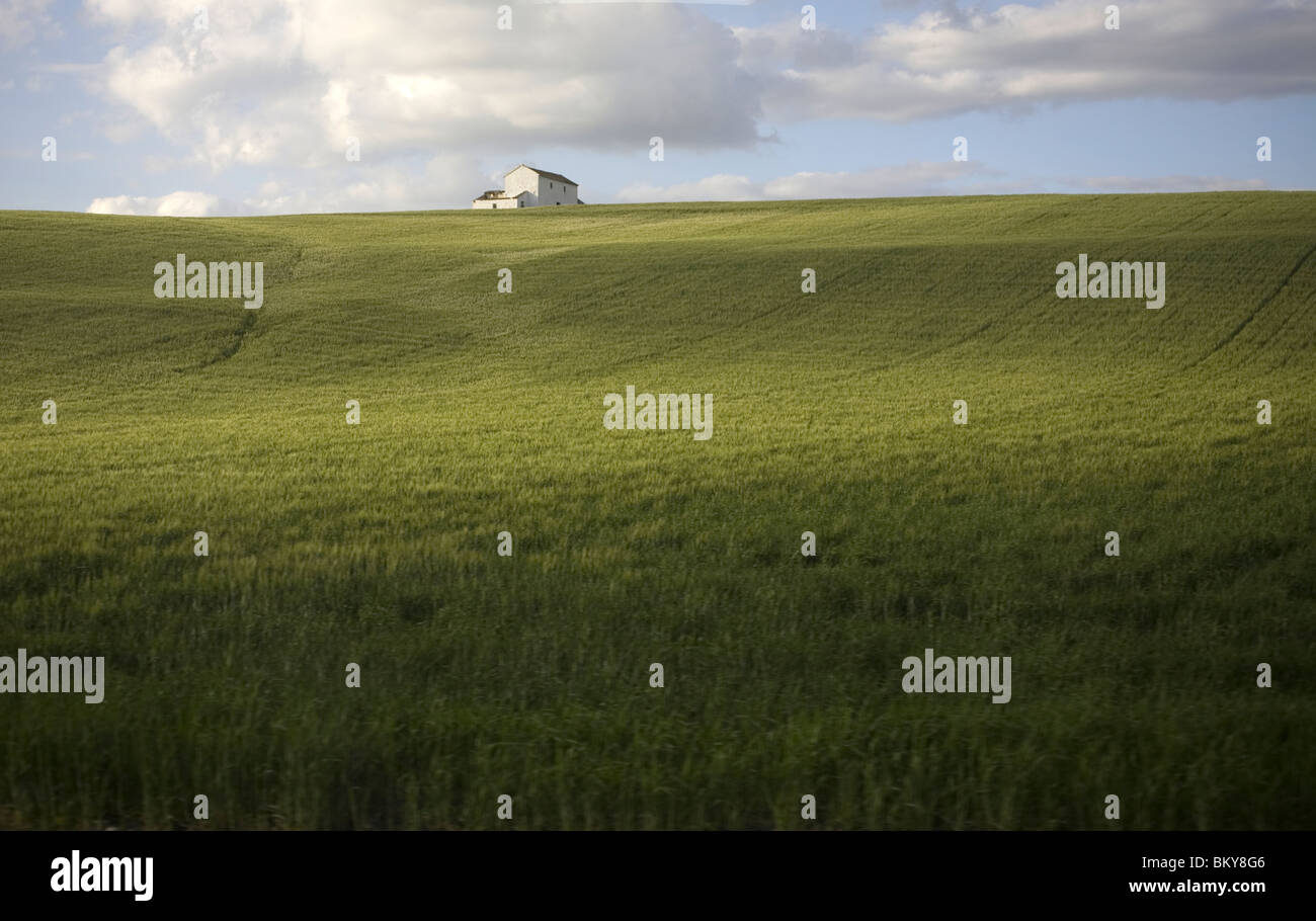 A white house sits in a wheat field in Arcos de la Frontera, Cadiz Province, Spain, March 18, 2008. Photo/Chico Stock Photo