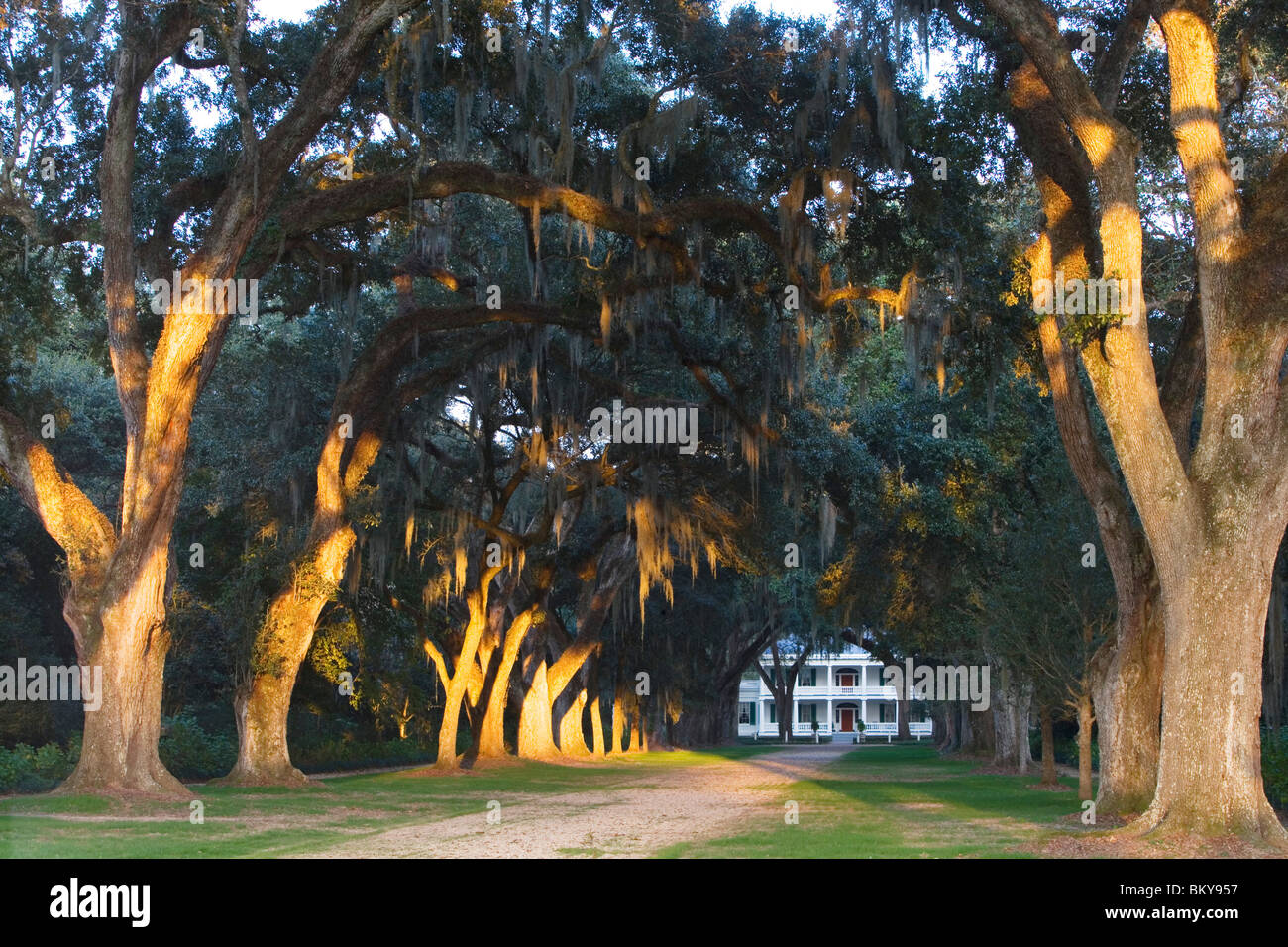 A Louisiana dream: an old oak alley leads towards Rosedown Plantation, St. Francisville, Louisiana, USA - Stock Image