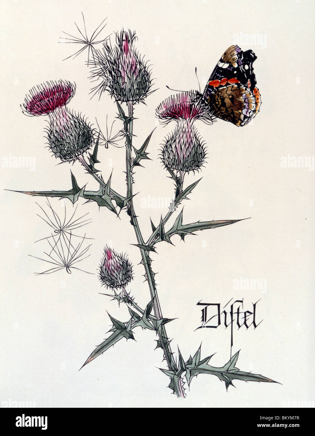 Thistle with Butterfly,  from Das Blumen ABC,  by Zaff and Roseberger,  USA,  Illinois,  Chicago,  Newberry Library - Stock Image