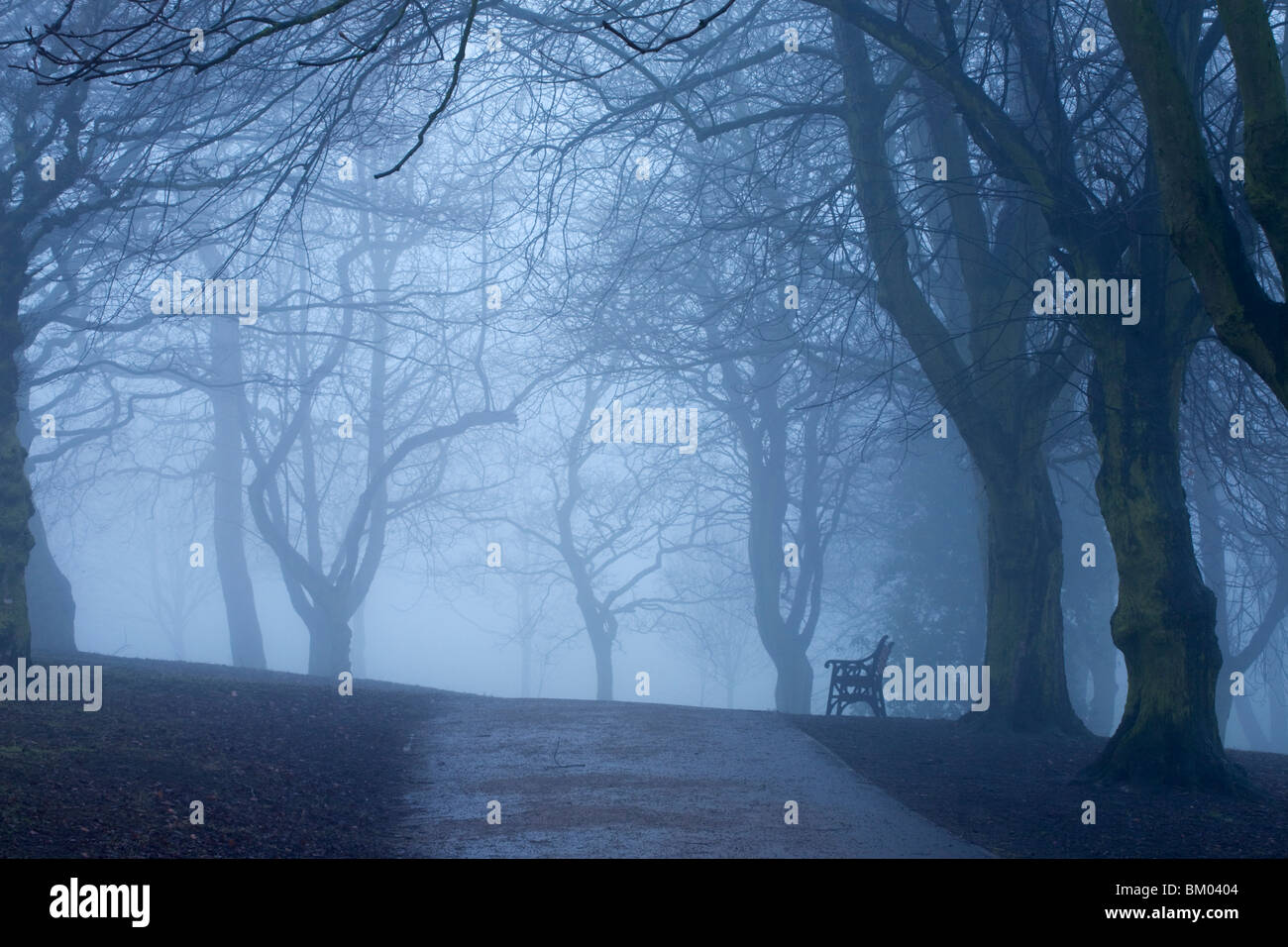A lone park bench on a foggy day in the park - Stock Image