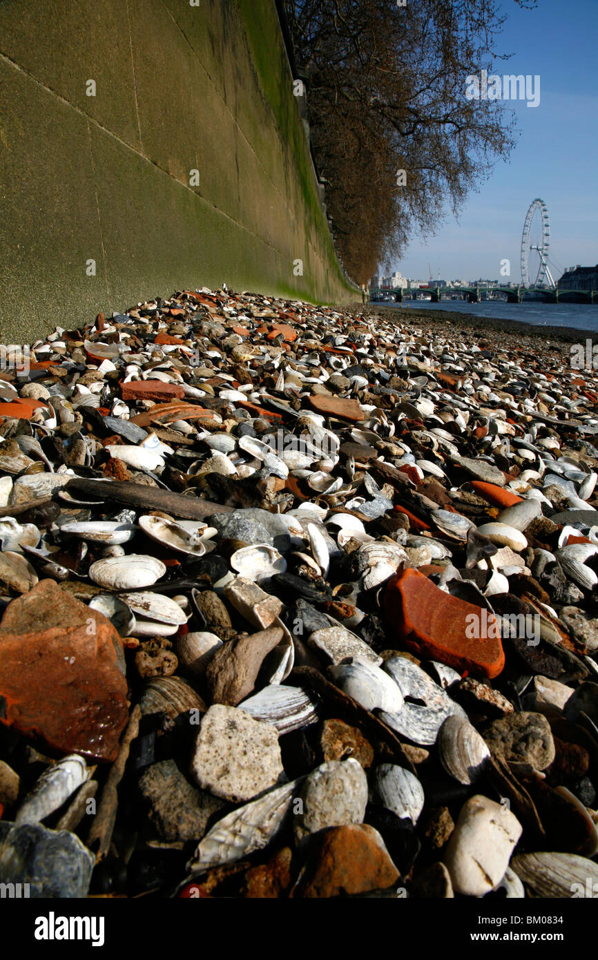 Shells on the foreshore of the River Thames at low tide, Westminster, London, UK. London Eye can be seen in the - Stock Image