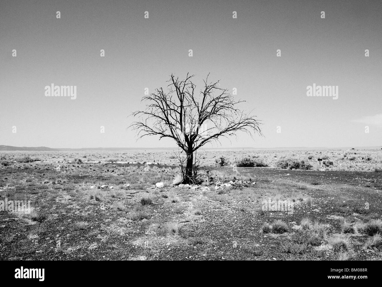 Lone tree stands stark and lonely against the arizona desert horizon landscape in two guns ghost town. - Stock Image