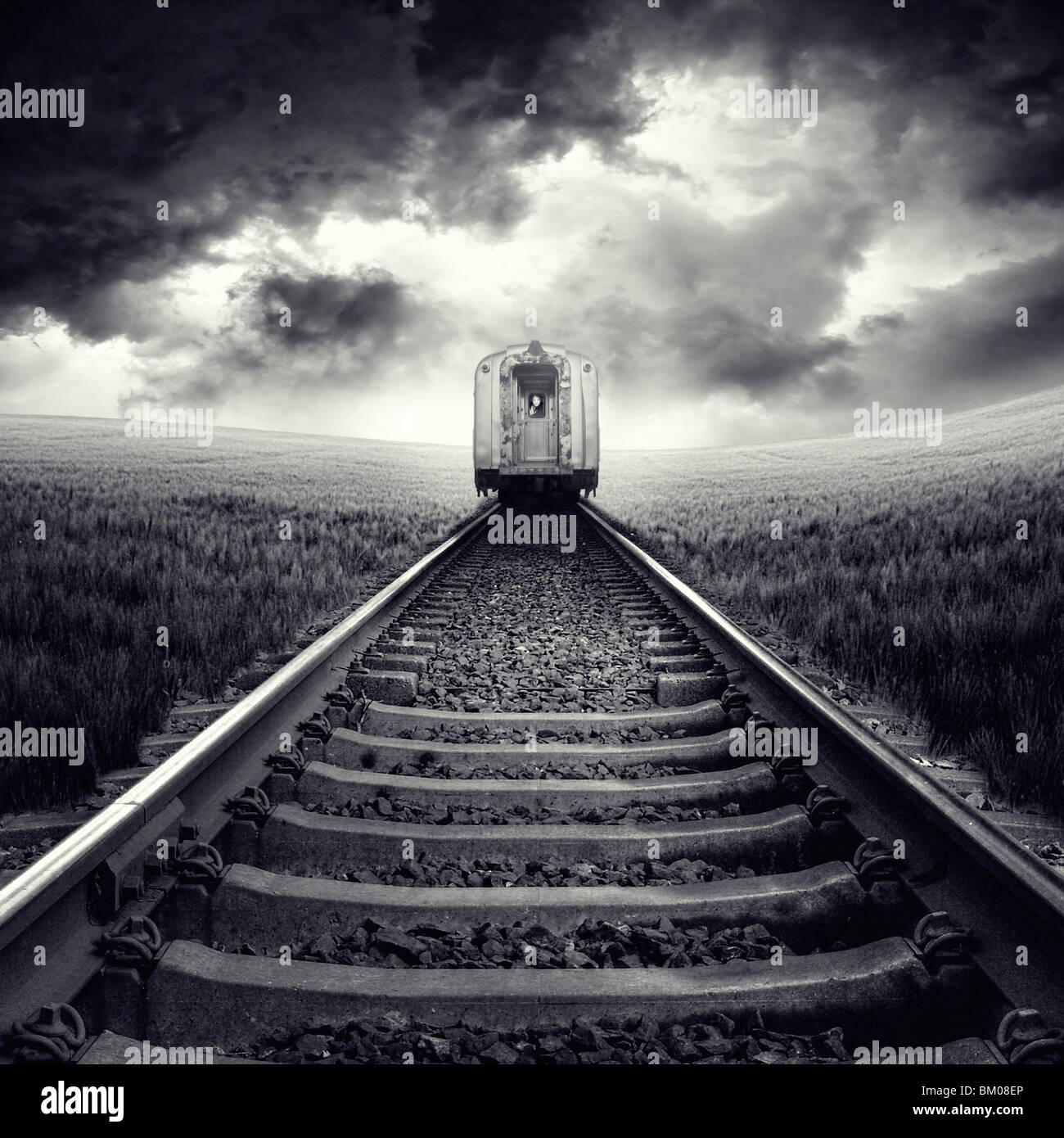A rear view of a train on rails passing through a field of corn with stormy skies - Stock Image