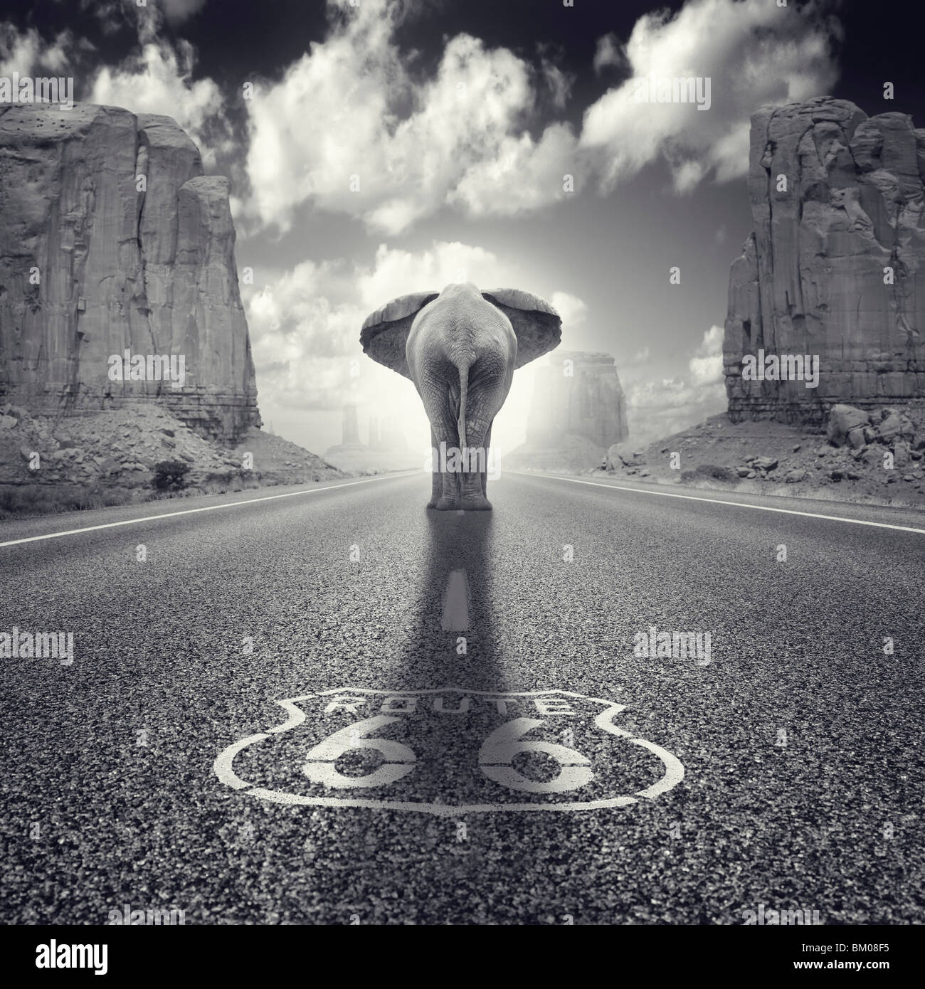 An elephant walking along route 66 in USA monument valley - Stock Image